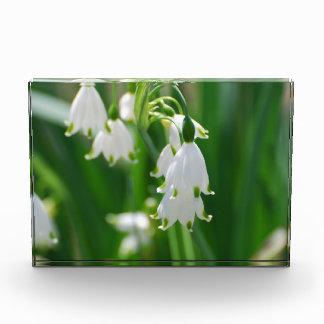 White Snow Drop Lilies Awards