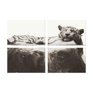 White snow Tiger - Big Cat sleeping Canvas Prints