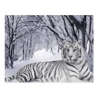 White Snow Tiger Postcard