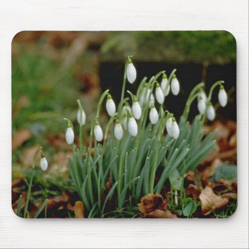 white Snowdrops flowers Mouse Pad