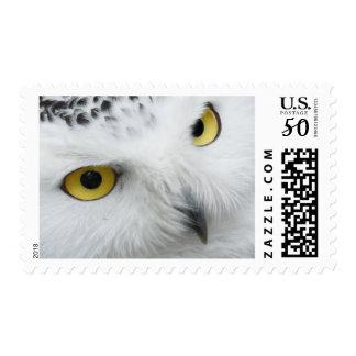 White Snowy Owl Eyes Stamp