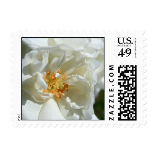 white & soft Roses - Wedding Postage