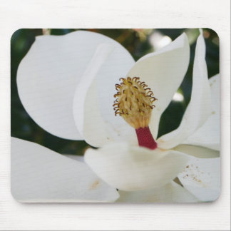 White southern magnolia flower gifts blossom close mouse pad