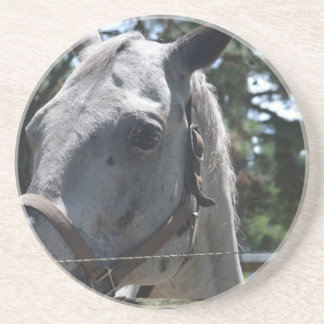 white spotted horse beverage coaster