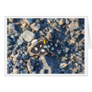 White Spotted Sable Moth Card