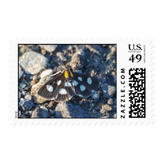 White Spotted Sable Moth Postage Stamps