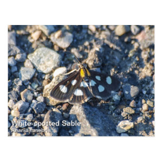 White Spotted Sable Moth Postcard