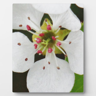 White spring bloom plaques