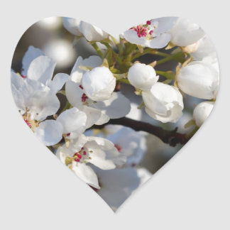 White Spring Blooming Bradford Pear Blossoms Heart Sticker