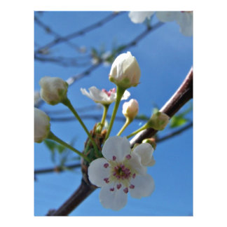 White Spring blossoms on show Flyer