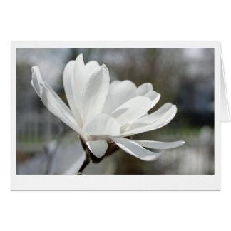 White spring flower card