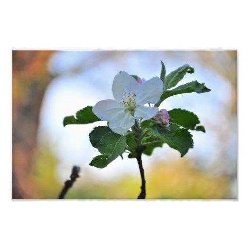 White spring flower photo art