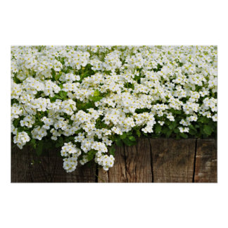 White spring flowers and wooden fence in sunny day poster