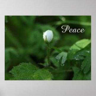 White Spring Flowers Poster
