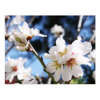 White spring postcard