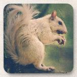 White Squirrel Drink Coaster
