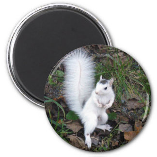White Squirrel Magnet