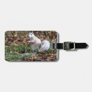 White Squirrel of Brevard Bag Tag
