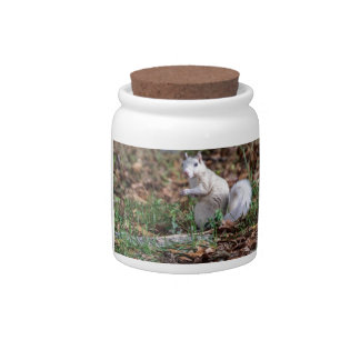 White Squirrel of Brevard Candy Jars