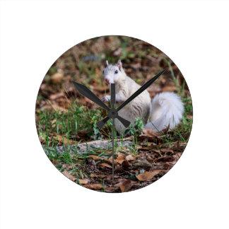 White Squirrel of Brevard Round Wallclocks