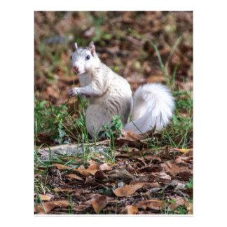 White Squirrel of Brevard Letterhead