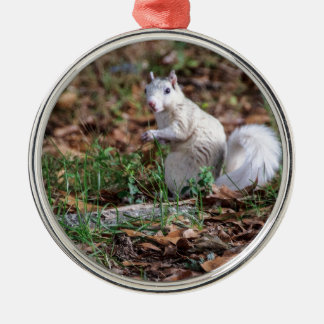 White Squirrel of Brevard Metal Ornament