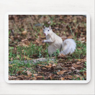 White Squirrel of Brevard Mouse Pad