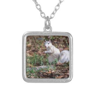 White Squirrel of Brevard Jewelry