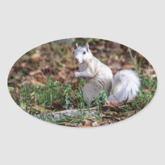 White Squirrel of Brevard Oval Sticker