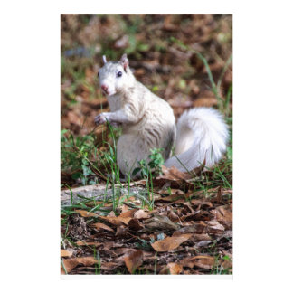 White Squirrel of Brevard Stationery