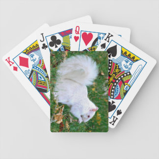 White Squirrel Playing Cards