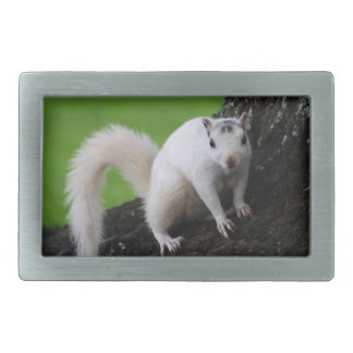 White Squirrel Rectangular Belt Buckle