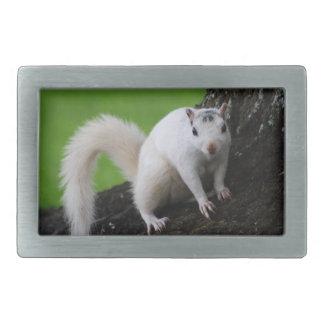 White Squirrel Rectangular Belt Buckle