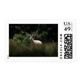 White Stag,  Deer, wildlife, animal photo postage