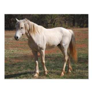 White Stallion Card