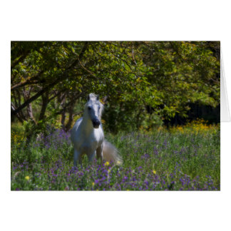 White Stallion greeting cards