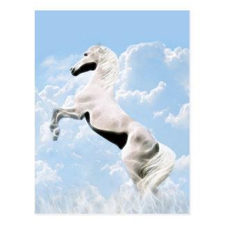 White stallion horse rearing postcard