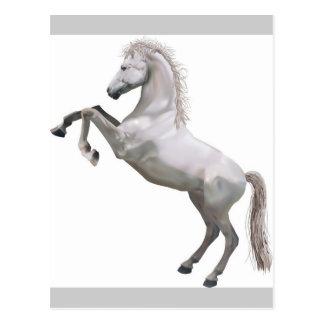 White Stallion Postcard