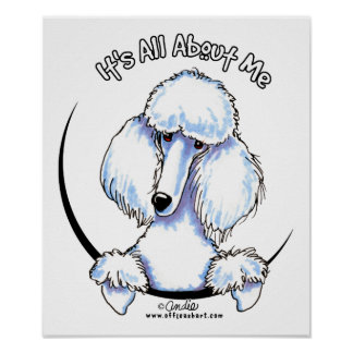 White Standard Poodle IAAM Poster