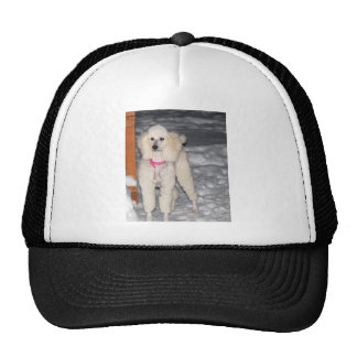 White Standard Poodle in Snow Hat