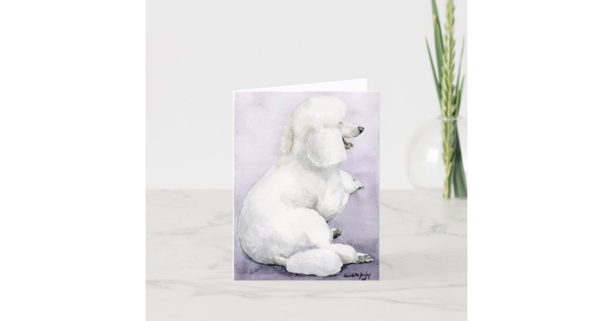 White Standard Poodle Laying Dog Art Note Card Zazzle Com