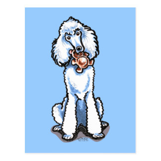 White Standard Poodle Teddy Bear Postcard