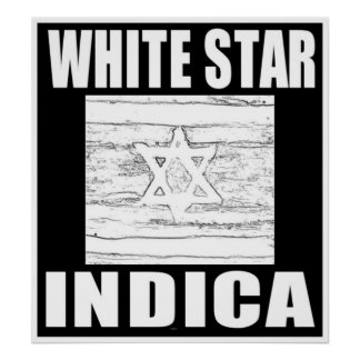 WHITE STAR INDICA POSTERS