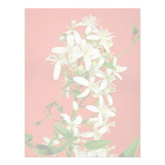 white Star jasmine (Jasminum pubescens) flowers Letterhead Design