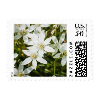 White Star Shaped Flowers Postage