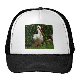 White Stork Trucker Hat