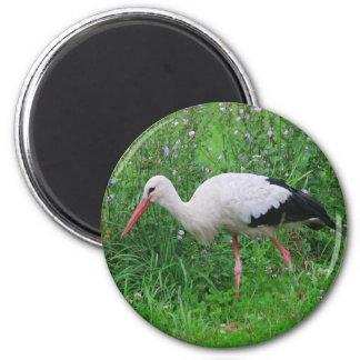 White stork magnet