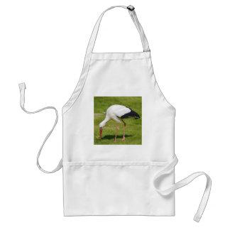 White stork on grass adult apron
