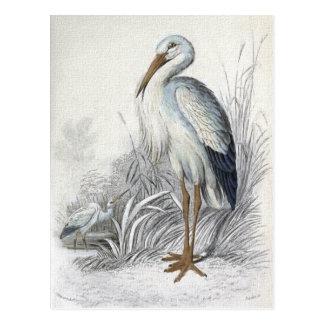 """White Stork"" Postcard"