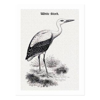 White Stork Vintage Bird Illustration Postcard